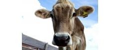 Dicas para garantir o retorno do seu investimento com o manuseio do botijão de sêmen bovino