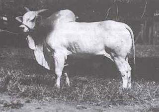Godhavari