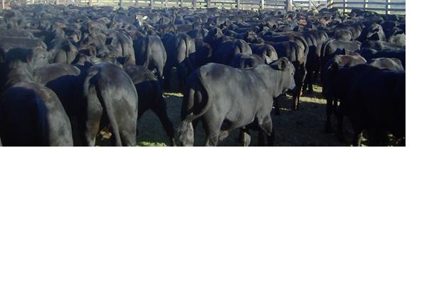 Rentabilidade da monta natural e inseminação artificial em tempo fixo na pecuária de corte